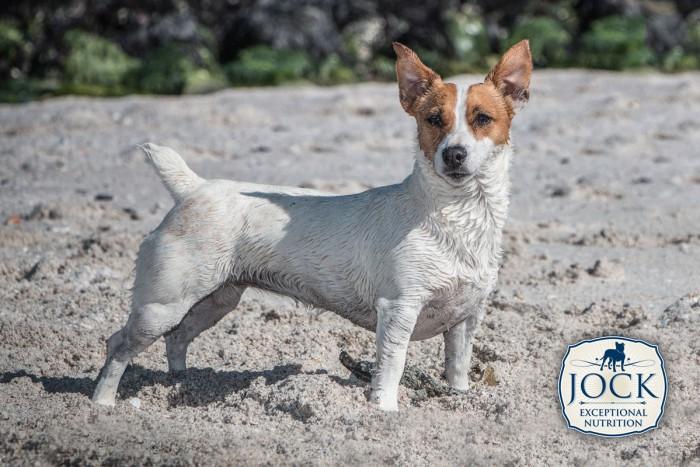 Know-your-breed-JR-Nov-2