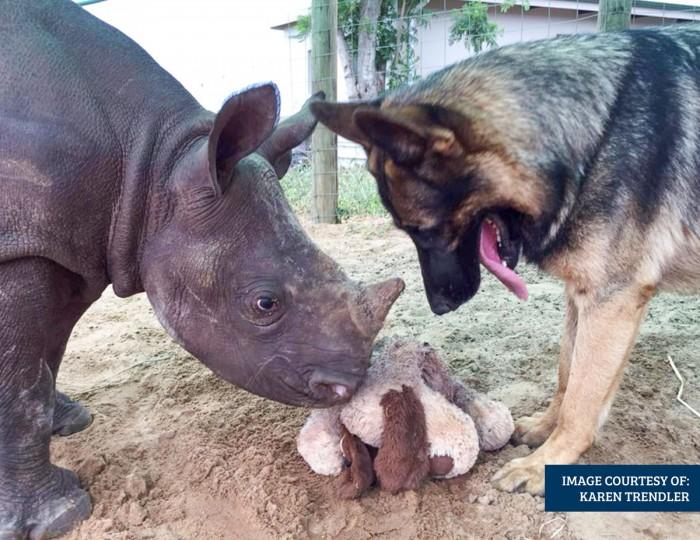2016-Feb---Hero-Poaching-dog-with-rhino[21]