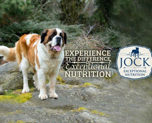 Know Your Breed - Saint Bernard - JOCK Dog Food