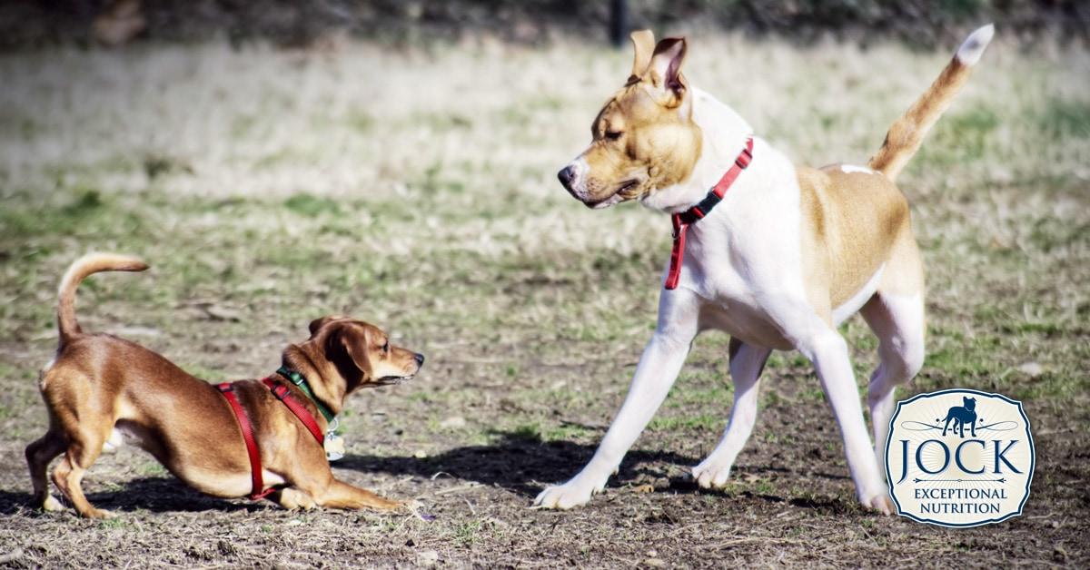 ATX - Your dog's body language - JOCK
