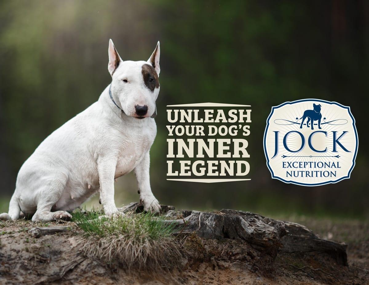 Bull Terrier Dog Breed: photos, features, description 58