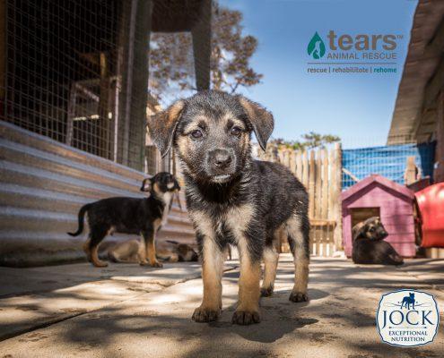 Hero Tears Puppy