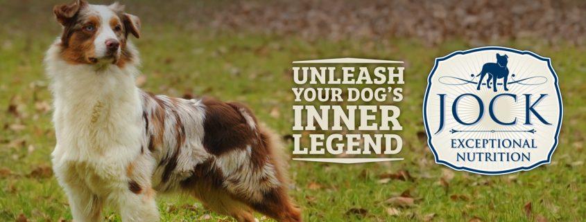 Know your breed: Australian Shepherd