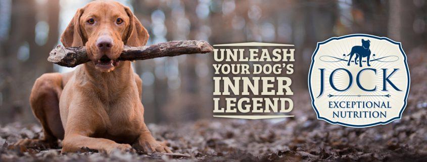 Know your breed: Vizsla